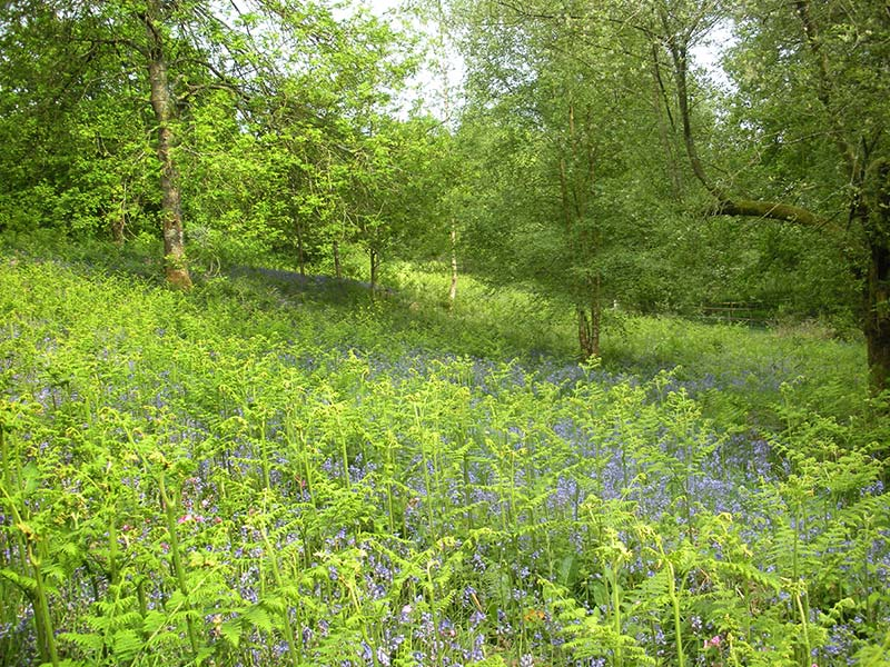 management objectives for a semi natural woodland Woodland management | cumbria woodlands  sssi semi-natural woods it may be acceptable to  change resilience and the woodland managers objectives.