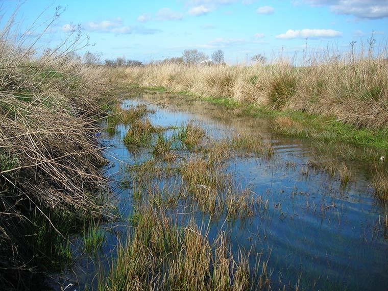 Water vole survey site
