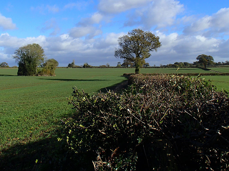 Preliminary Ecological Appraisal for Proposed Development of Site near Yeovil in Somerset